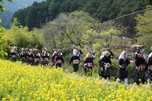 春の大原女時代行列、黄色の菜の花畑に紺のかすりが素敵ですね