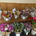 お花コーナーも色とりどりで見てると癒されます!