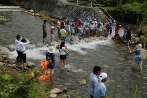 高野川の水生生物調査、毎年7月末に開催されます