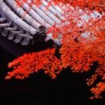 勝林院の紅葉