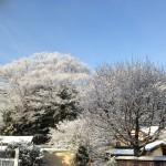 木には雪のはな