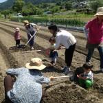 耕すのはお母さん達、おちびちゃんはスコップで