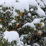 例年にない大雪の大原