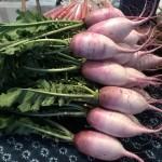 冬野菜いろいろ販売中♪