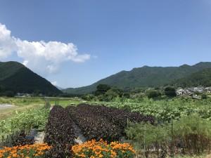 台風接近の為、7月29日(日)臨時休業とさせていただきます。日曜朝市もお休みとなります。ご了承ください。